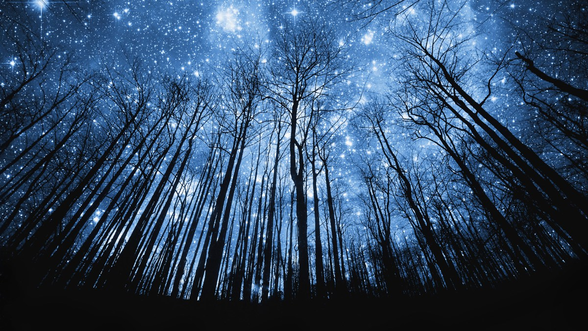 Tree Silhouette Against Starry Night Sky --- Image by © Robert Llewellyn/Corbis
